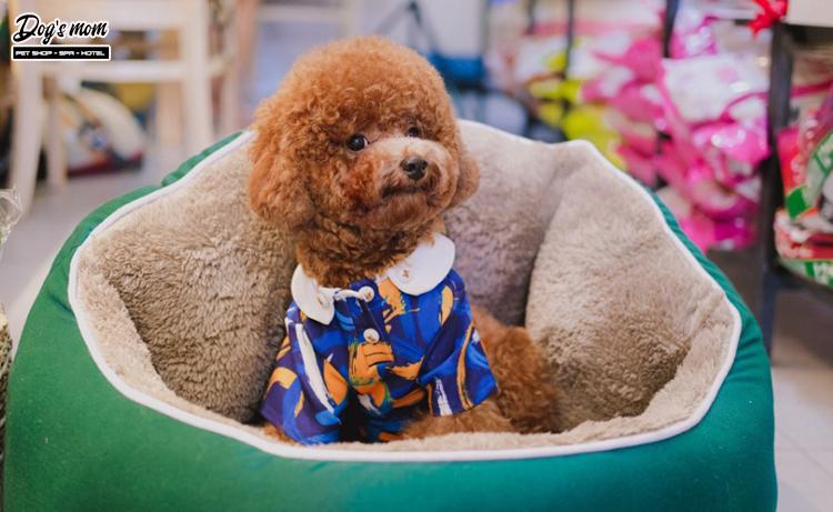 Cửa hàng quần áo chó mèo tphcm