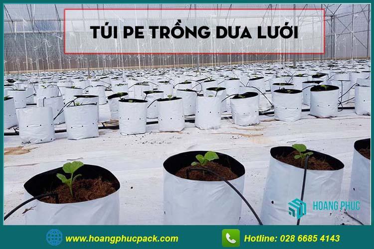 Túi PE trồng dưa lưới